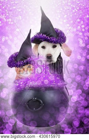 Halloween Pet Witch Dog And Cat Dressed Up In Costume And Conjure Magic Potion. Bad Puppy And Kitten