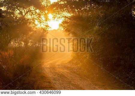 Scenic Forest Road Or Trail With Warm Feel In Cold Winter Morning Fog Or Mist And Orange Color Sunli