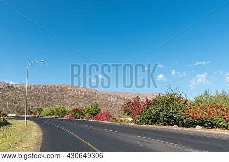 A Street, Lined With Flowering Bougainvilleas, In De Doorns In The Western Cape Province