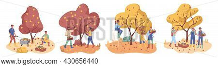People Gather Apples Crop In Boxes, Farmers Collect Ripe Fruits From Trees, Flat Cartoon Characters.