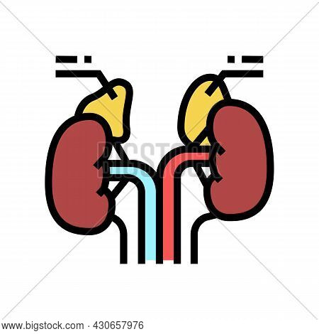Adrenals Endocrinology Color Icon Vector. Adrenals Endocrinology Sign. Isolated Symbol Illustration