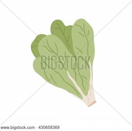 Bunch Of Green Fresh Lettuce Leaves. Icon Of Raw Leafy Vegetable. Leaf Veggie. Flat Vector Illustrat
