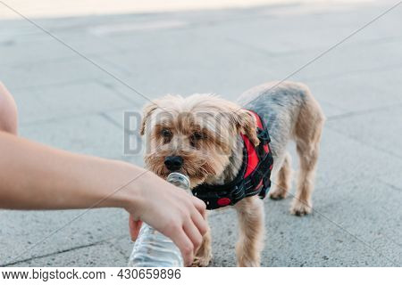 Happy, Dog, Drinking, Water, Bottle, Woman, Hand, Hydration, Concept, Heat Wave, Adorable, Animal, C