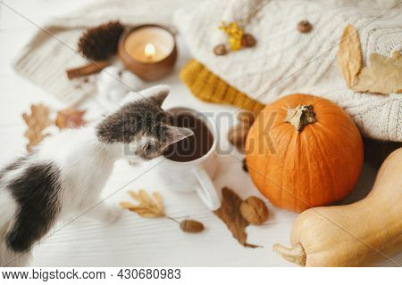 Curious Little Kitten Looking At Cup Of Tea On Background Of Autumn Leaves, Pumpkin, Cozy Sweaters O