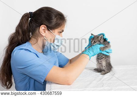 Examination Of The One Or Two Month Old Kitten. Veterinary Clinic, Prevention And Treatment Of Disea