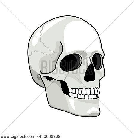 Simple Skull. Smiling Skulls Vector Illustration For Pirates Darkness Art, Evil Horror Graphics, Hea
