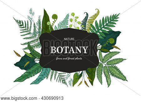 Botanical Background. Hand Drawn Wallpaper With Forest Foliage. Green Fern Sprouts And Bourgeon. Fra