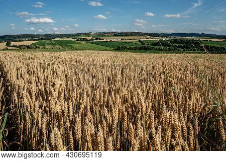 Idyllic Summer Landscape With Grain Field,meadows And Typical Czech Countryside.gold Wheat Field Pan