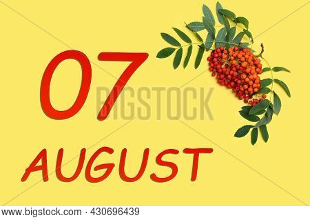7th Day Of August. Rowan Branch With Red And Orange Berries And Green Leaves And Date Of 7 August On