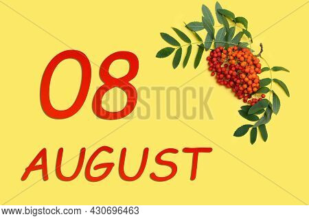 8th Day Of August. Rowan Branch With Red And Orange Berries And Green Leaves And Date Of 8 August On