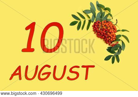 10th Day Of August. Rowan Branch With Red And Orange Berries And Green Leaves And Date Of 10 August