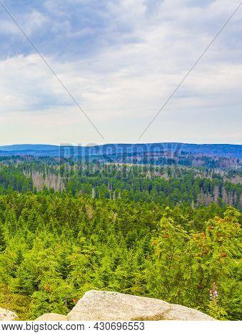 Forest With Dead Fir Trees Brocken Mountain Peak Harz Germany
