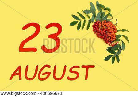23rd Day Of August. Rowan Branch With Red And Orange Berries And Green Leaves And Date Of 23 August
