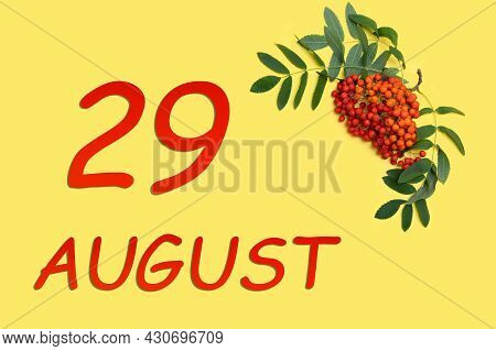 29th Day Of August. Rowan Branch With Red And Orange Berries And Green Leaves And Date Of 29 August