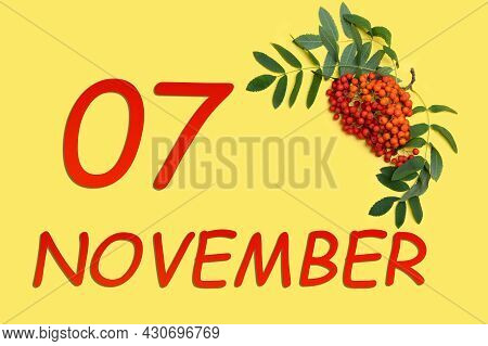 7th Day Of November. Rowan Branch With Red And Orange Berries And Green Leaves And Date Of 7 Novembe