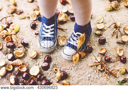Closeup Of Feet And Shoes Of Toddler Girl Picking Chestnuts In A Park On Autumn Day. Child Having Fu