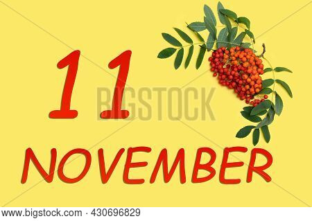 11th Day Of November. Rowan Branch With Red And Orange Berries And Green Leaves And Date Of 11 Novem