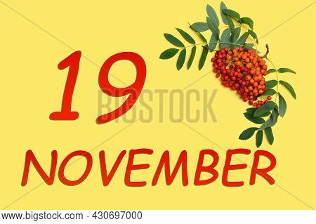 19th Day Of November. Rowan Branch With Red And Orange Berries And Green Leaves And Date Of 19 Novem