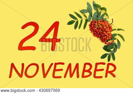 24th Day Of November. Rowan Branch With Red And Orange Berries And Green Leaves And Date Of 24 Novem