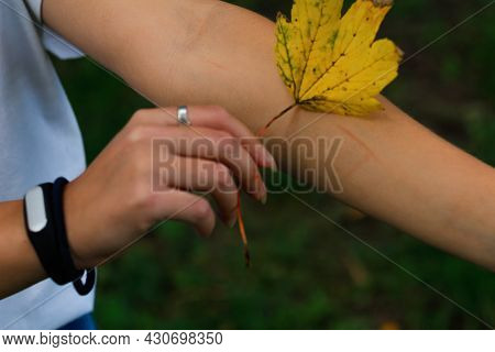 Defocus Female Hand Holding Yellow Dry Leaf And Put It On Scratched Hand. Hello Autumn. Women Standi