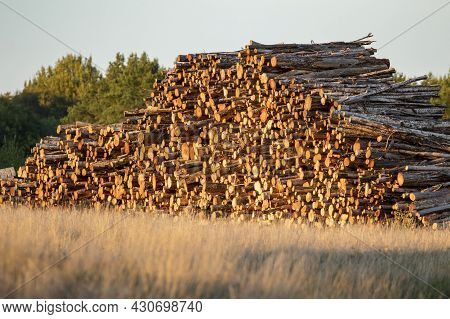 Felled Logs Piled Together On The Field