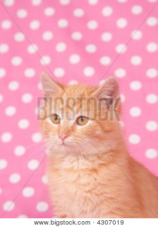 A yellow kitten against a pink and white polka dot background for use on valentines day or parties. poster