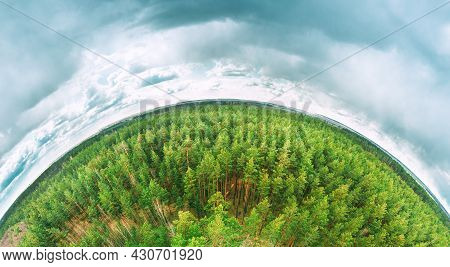 Aerial View Green Coniferous Forest Pines Woods Landscape In Spring Day. Top View Of Beautiful Europ