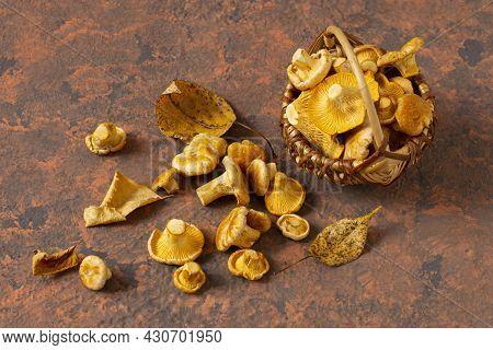 Wild Chanterelle Mushrooms Fall Out Of Wicker Basket. Organic Fresh Chanterelles On Reddish-brown Te