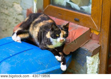 Colorful Patchy Cat Lying On A Garbage Can