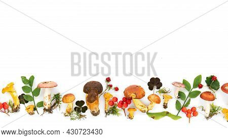 Forest Edible Mushroom Border. Design Template With A Border Of Multi-colored Mushrooms Collected In