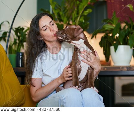 Kissing And Caregiving Pet Owner Petting And Hugging Pitbull Dog. Pet-centric Dog Lover And Fluffy F