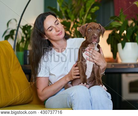 Loving And Caregiving Pet Parent Petting And Cuddling Pitbull Pup. Horizontal Shot Of Dog Lover And