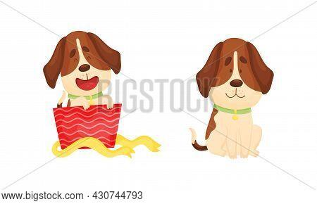Cute Funny Beagle Dog Set. Cute Adorable Pet Animal Cartoon Vector Illustration