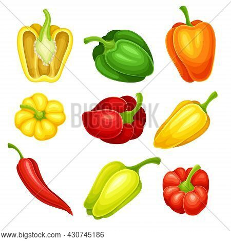 Chili Pepper And Bell Pepper Colorful Vegetable Ingredient For Culinary Vector Set