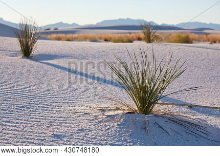 Unusual natural landscapes in White Sands Dunes in New Mexico, USA