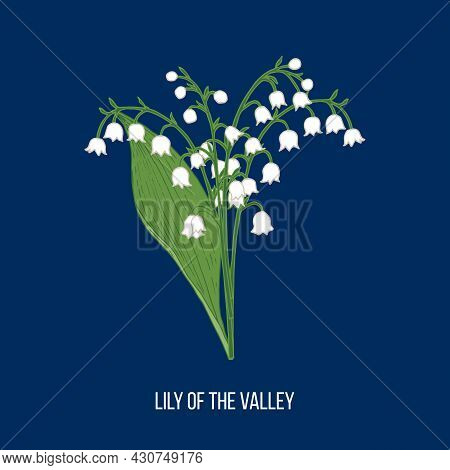 Lily Of The Valley Convallaria Majalis, Spring Flower. Hand Drawn Vector Illustration