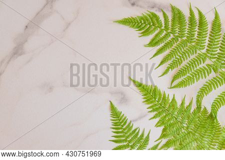 Top View Of Green Tropical Fern Leaves On White Marble Background. Flat Lay. Minimal Summer Concept