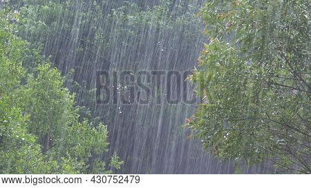 Torrential Rain, Raining, Inundation, Flooding, Storm, Rainy Day On Forest Branches Tree, Stormy In
