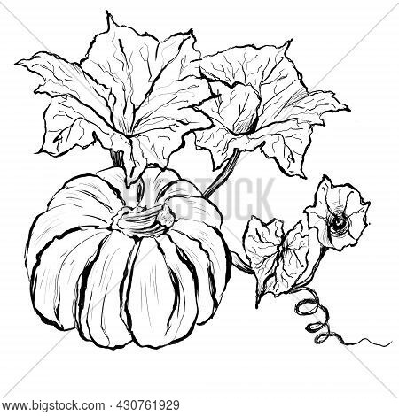 Pumpkin With Leaves Line Black And White Illustration
