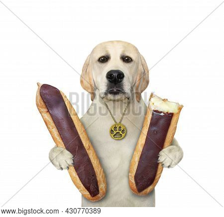 A Dog Labrador Is Eating Chocolate Eclairs. White Background. Isolated.