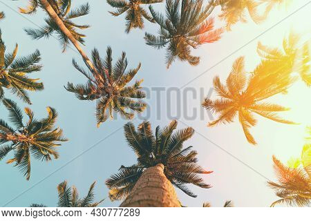 Tropical Palm Tree With Sun Light On Sunset Sky And Cloud Abstract Background.