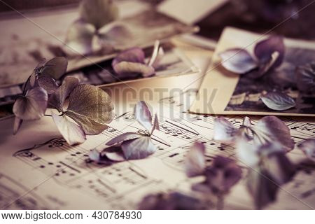 Memories - old and antique family photos with old photo album with dried flowers in vintage style