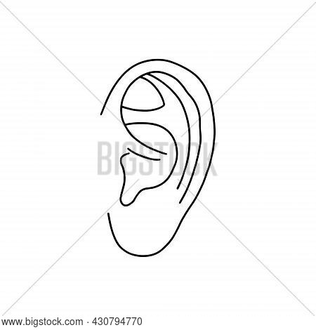 Vector, Anatomical Ears. Realistic, Outline Illustration Isolated On White Background. Vector Medica