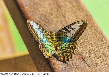 Beautiful Turquoise Blue Green Colored Butterfly Kuang Si Waterfall Laos.