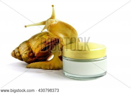 Snail And A Jar Of Skin Cream On A White Background. Selective Focus. Snail Mucus. Beauty Clinic Con