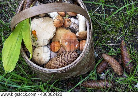 Basket With Mushrooms. Mushroom Platter. Lots Of Porcini And Boletus Mushrooms In A Wicker Basket. P