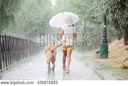 Girl with golden retriever dog during rain walking  under umbrella outside. Preteen kid with doggy pet in rainy day back portrait