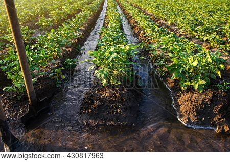Plantation Water Flow Control. Surface Irrigation Of Crops. Water Flows Through Canals. European Far