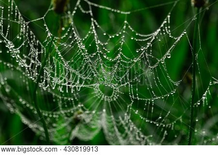 Spider Web With Dewdrops In The Early Morning On The Green Grass