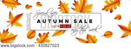 Autumn Offer Wallpaper. Graphic Thanksgiving Promotion. Orange Floral Background. Autumn Card With G